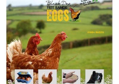 Website-Black Dog Eggs-Home-1